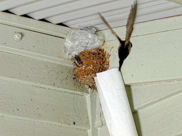 swallows-nest-3.jpeg