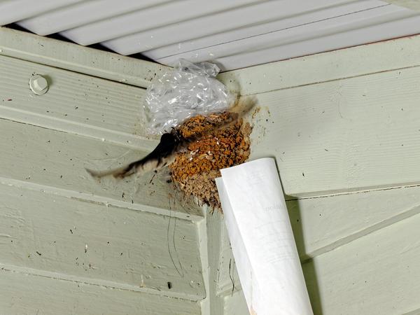swallows-nest-4.jpeg