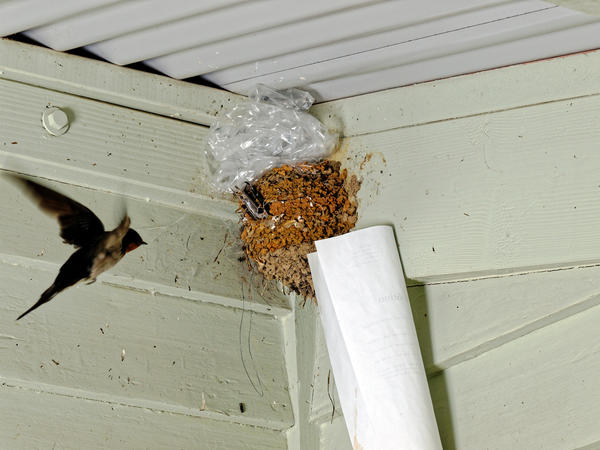 swallows-nest-5.jpeg