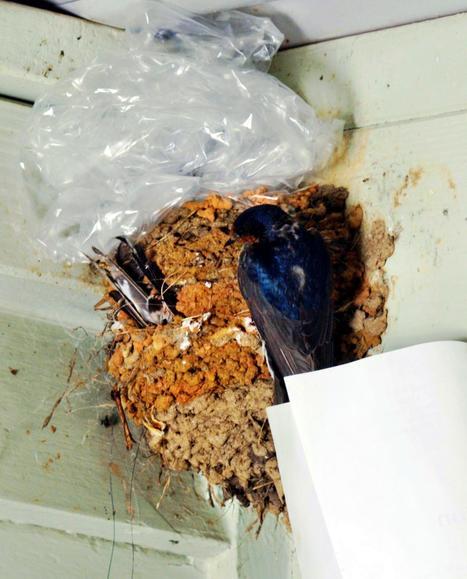 swallows-nest-8-detail.jpeg