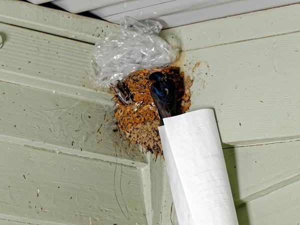 swallows-nest-8.jpeg