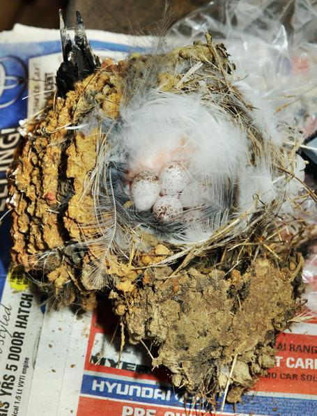 nest-demolition-8.jpeg