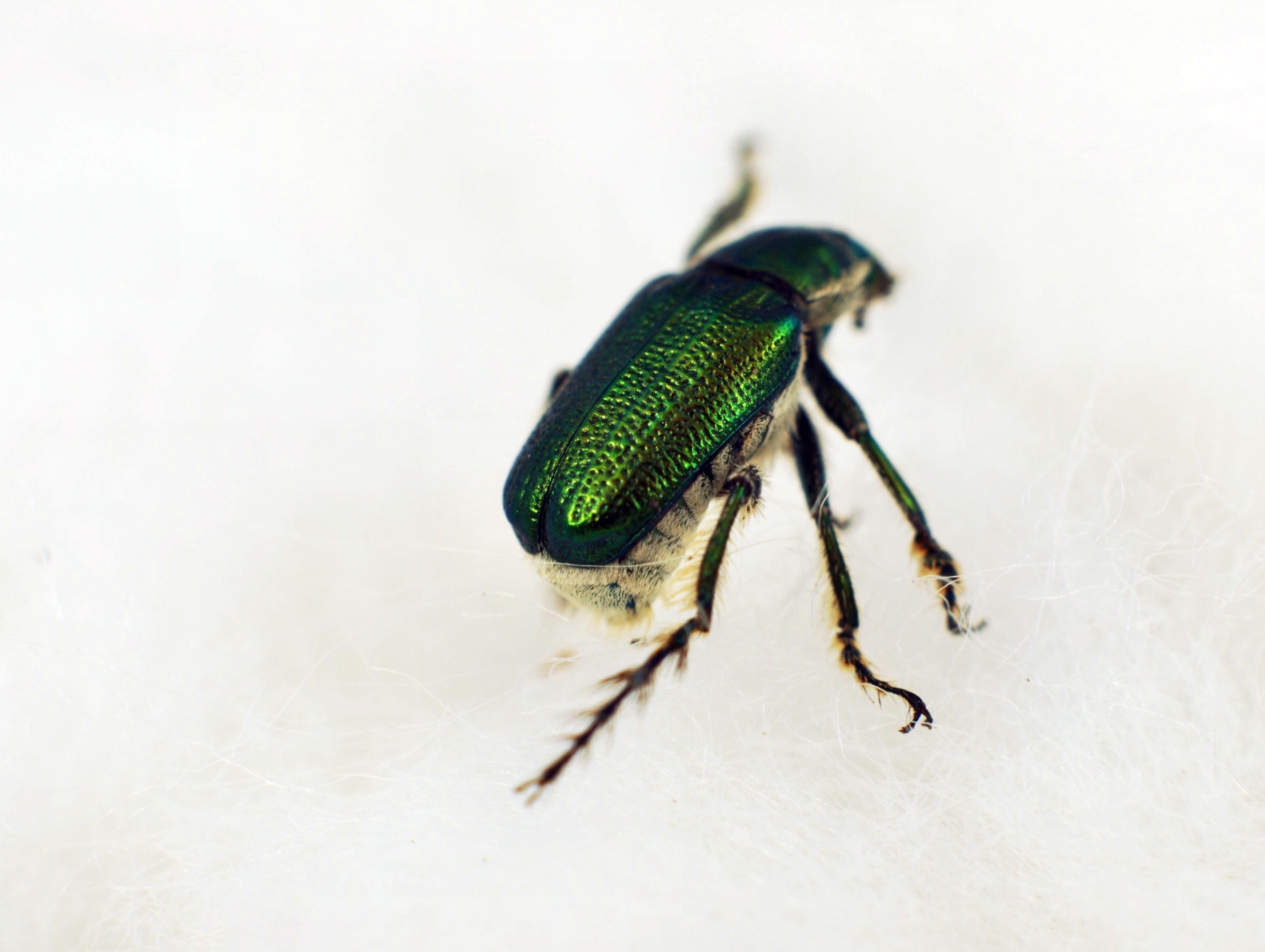 beetle-15.jpeg