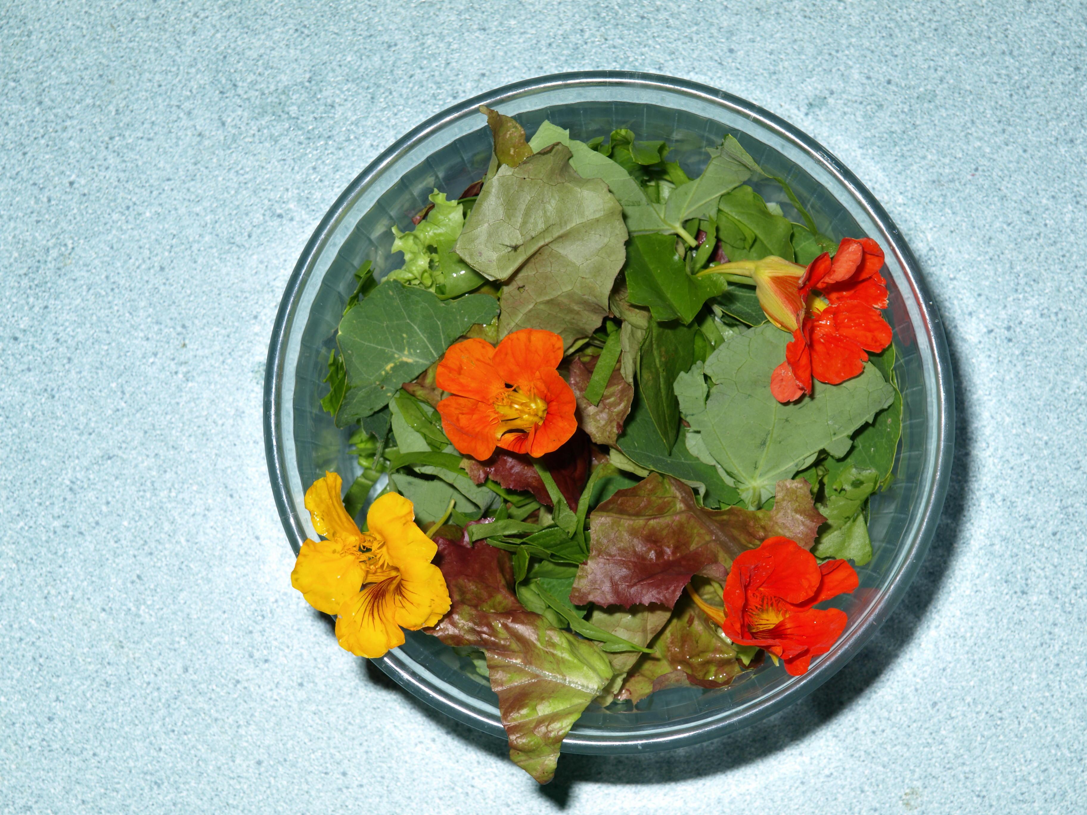 salad-1-olympus.jpeg