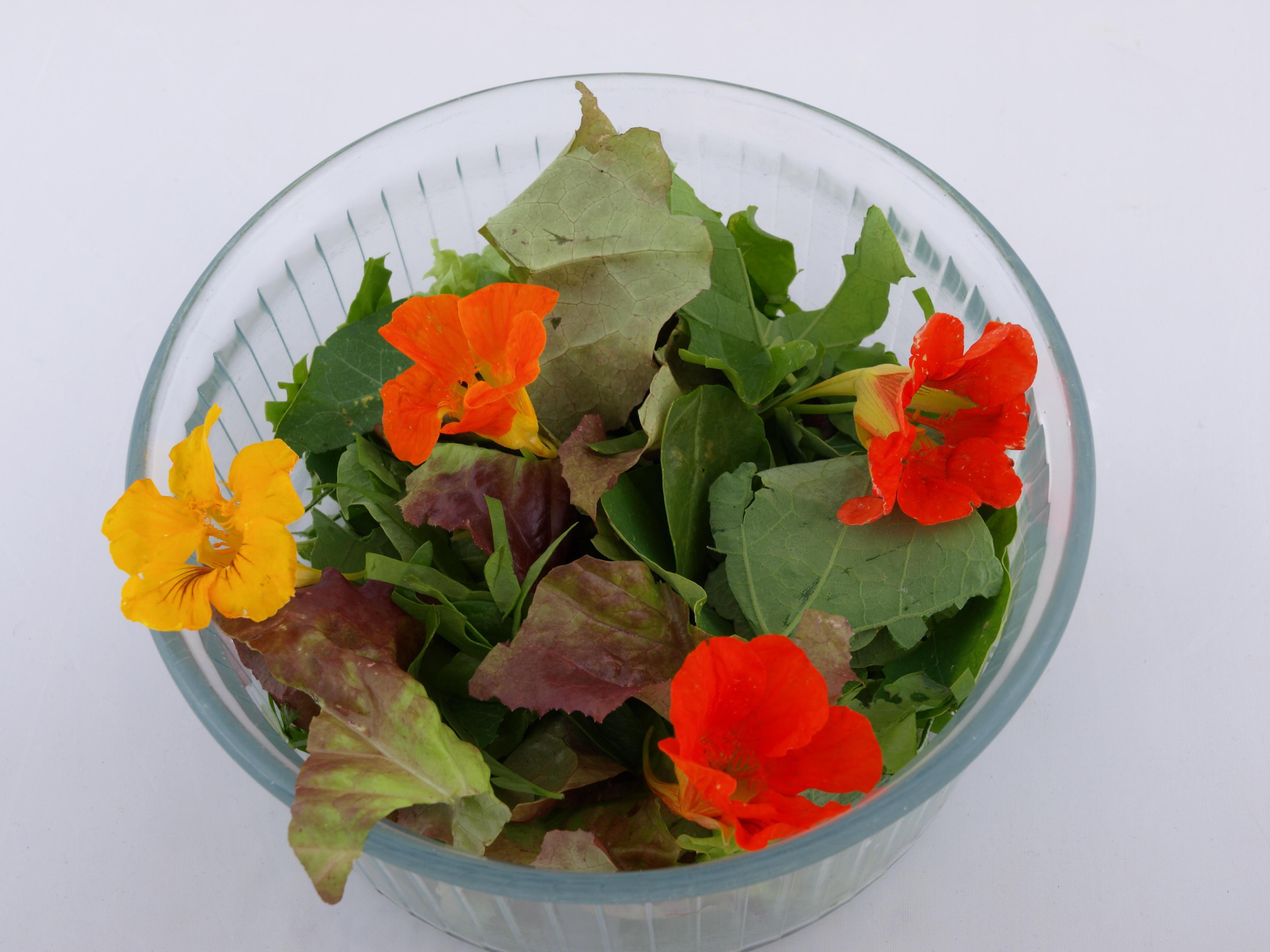 salad-2-olympus.jpeg