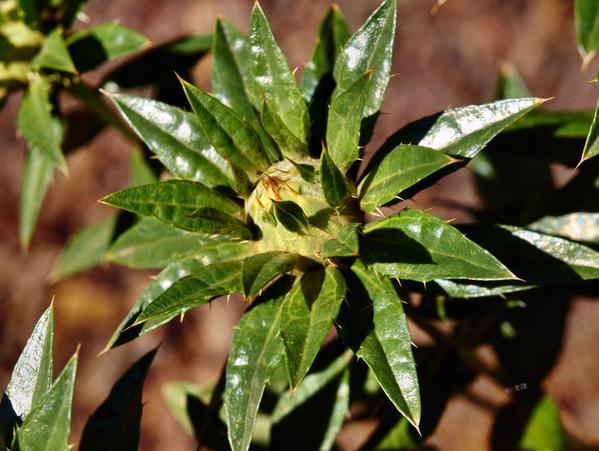 mystery-plant-1-4.jpeg