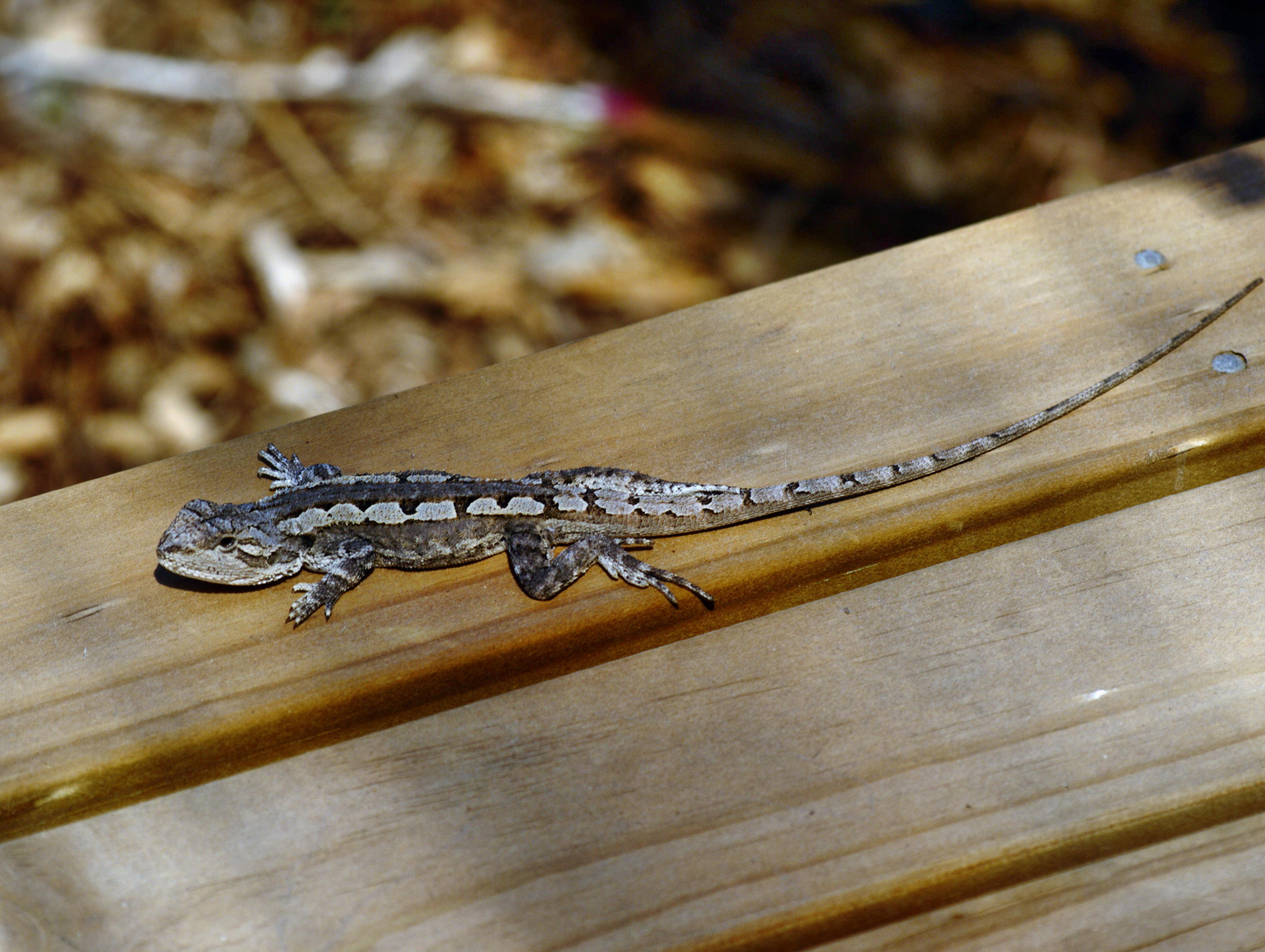 lizard-4.jpeg