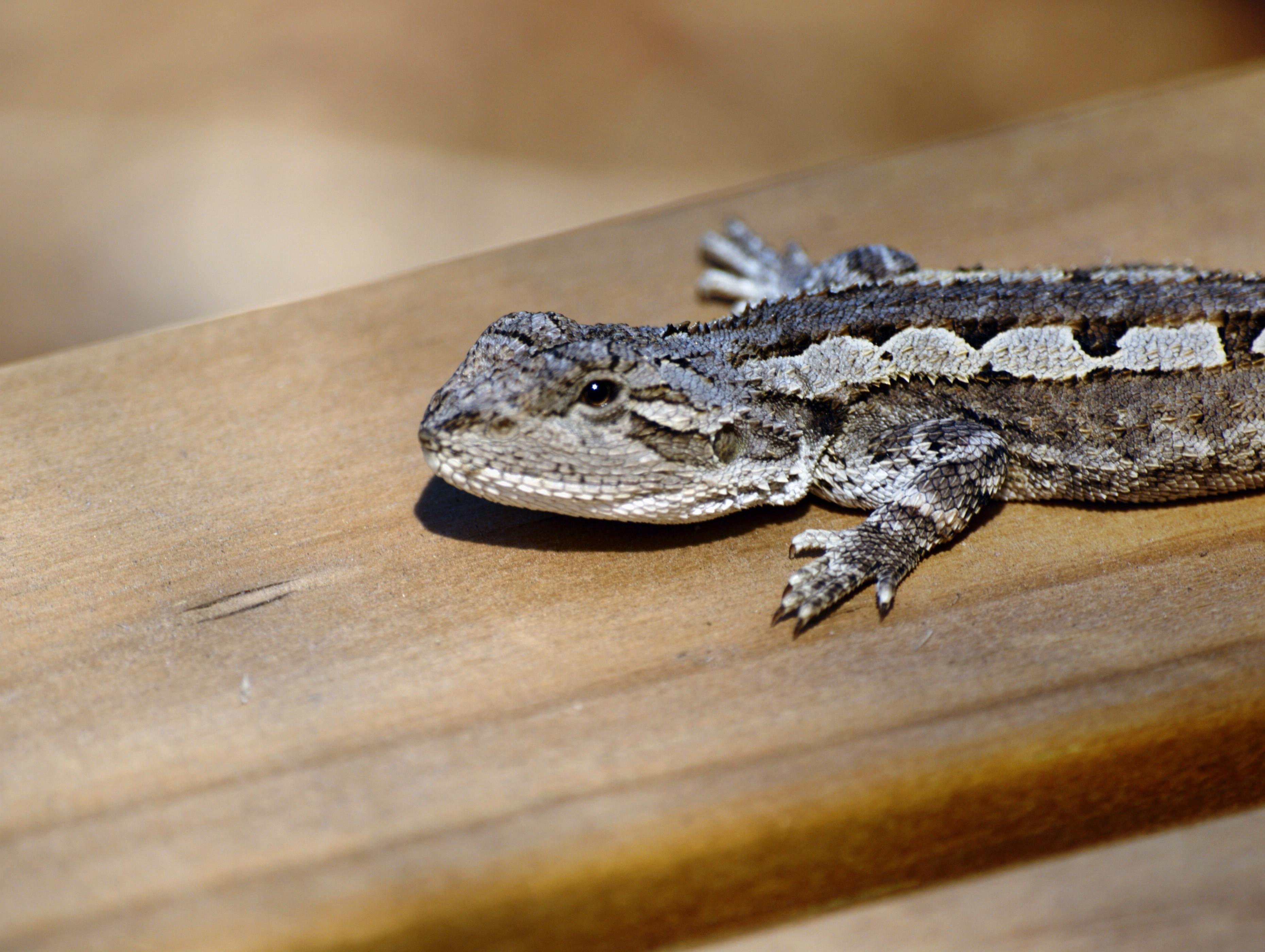 lizard-5.jpeg