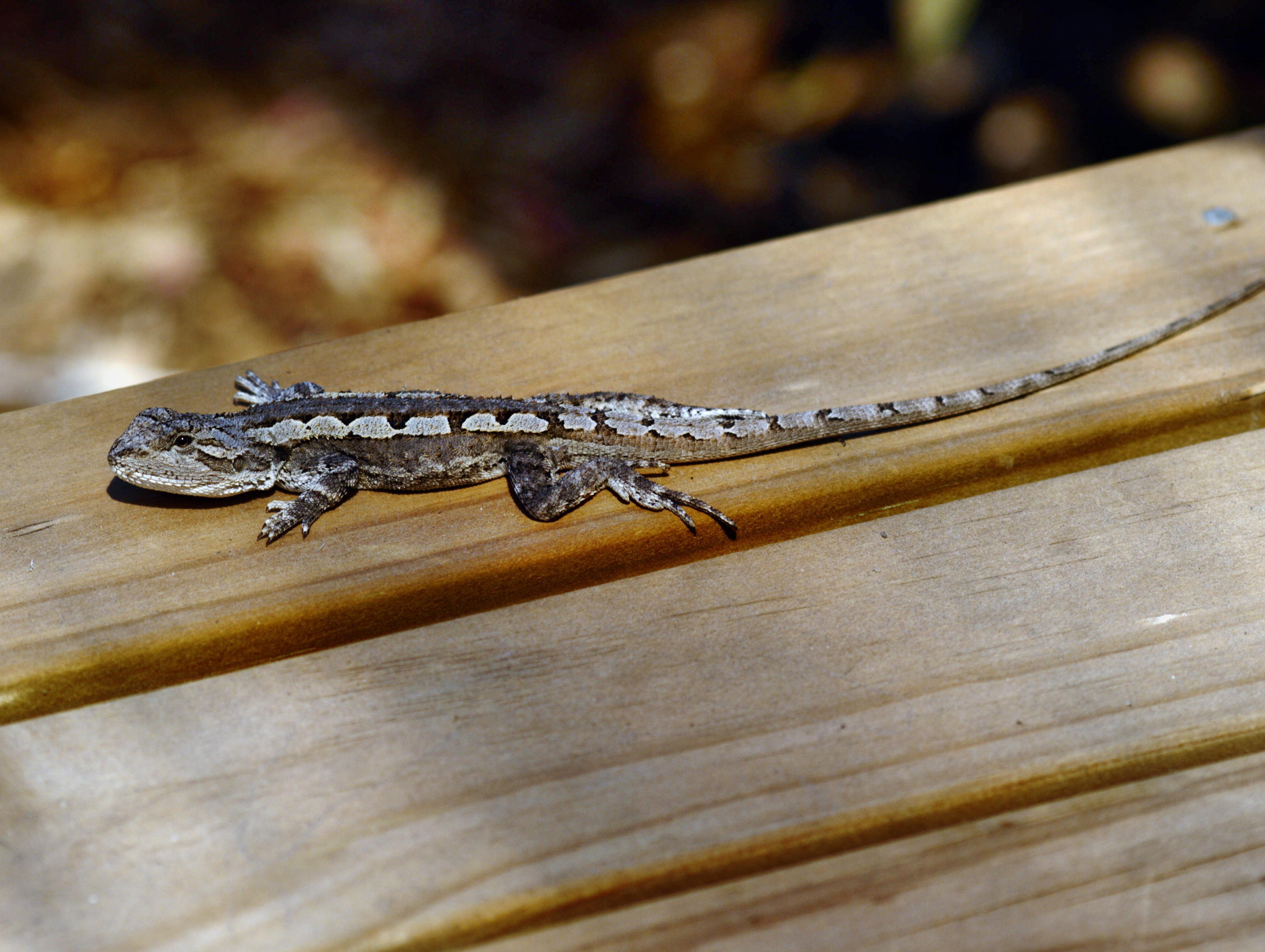 lizard-6.jpeg