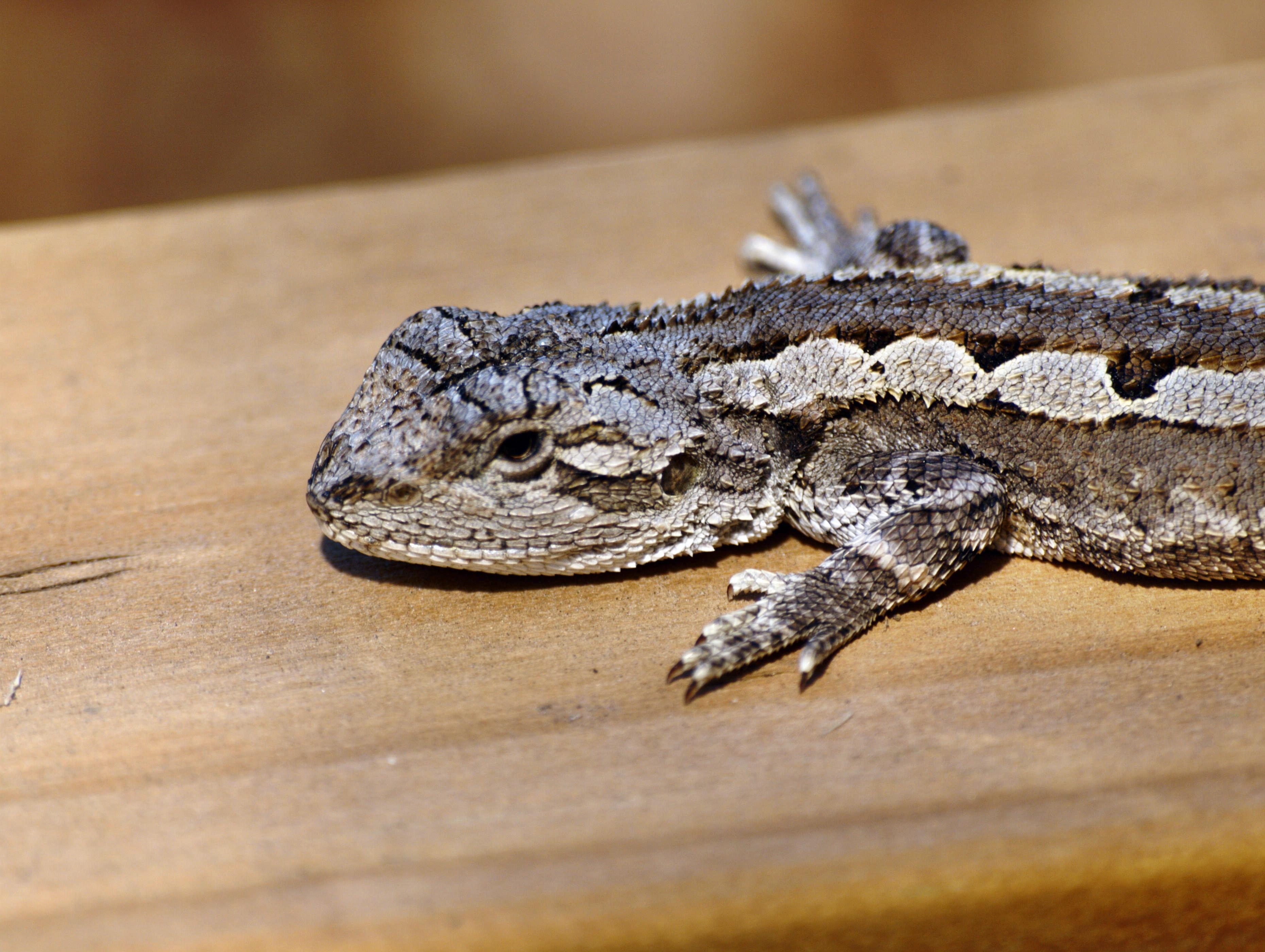 lizard-7.jpeg