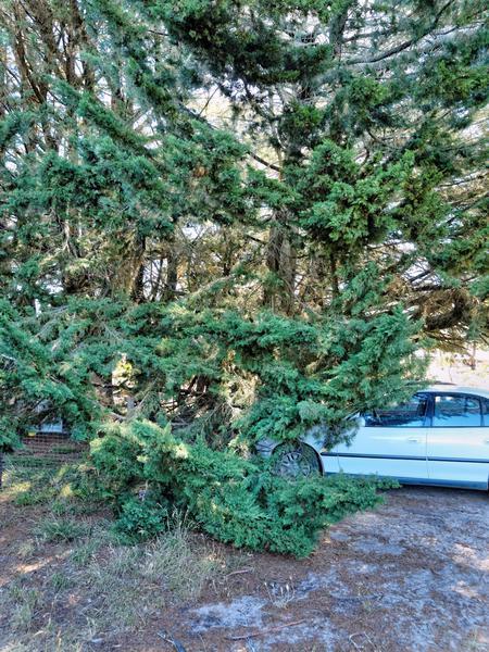 split-tree-1.jpeg