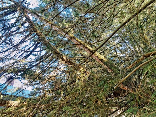 split-tree-2.jpeg