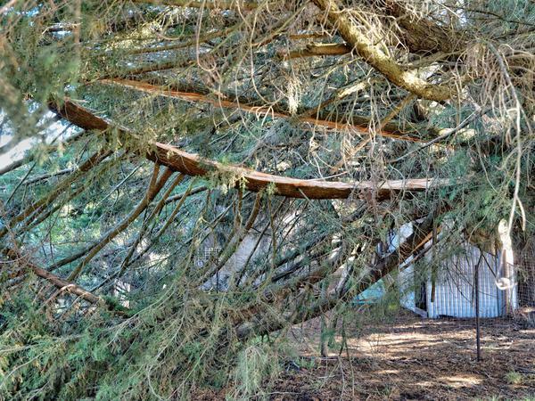 split-tree-8.jpeg