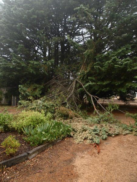 branch-before.jpeg