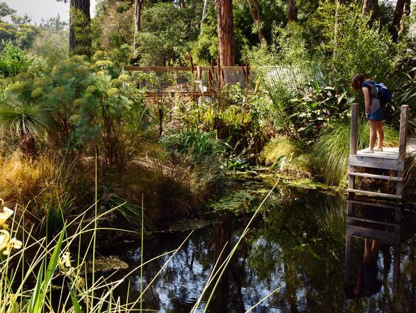 ryans-garden-10.jpeg