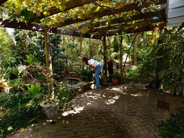 ryans-garden-13.jpeg