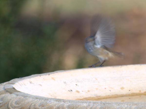bird-2.jpeg