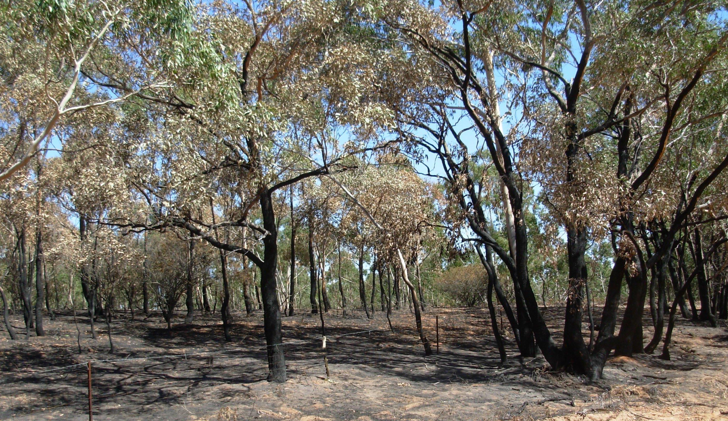 bushfire-5.jpeg