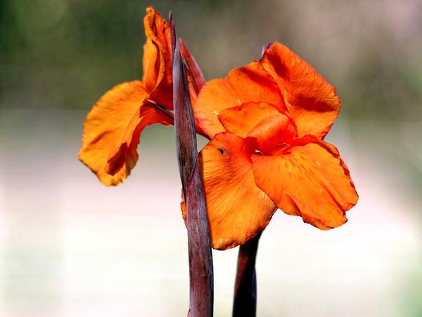 flower-5.jpeg
