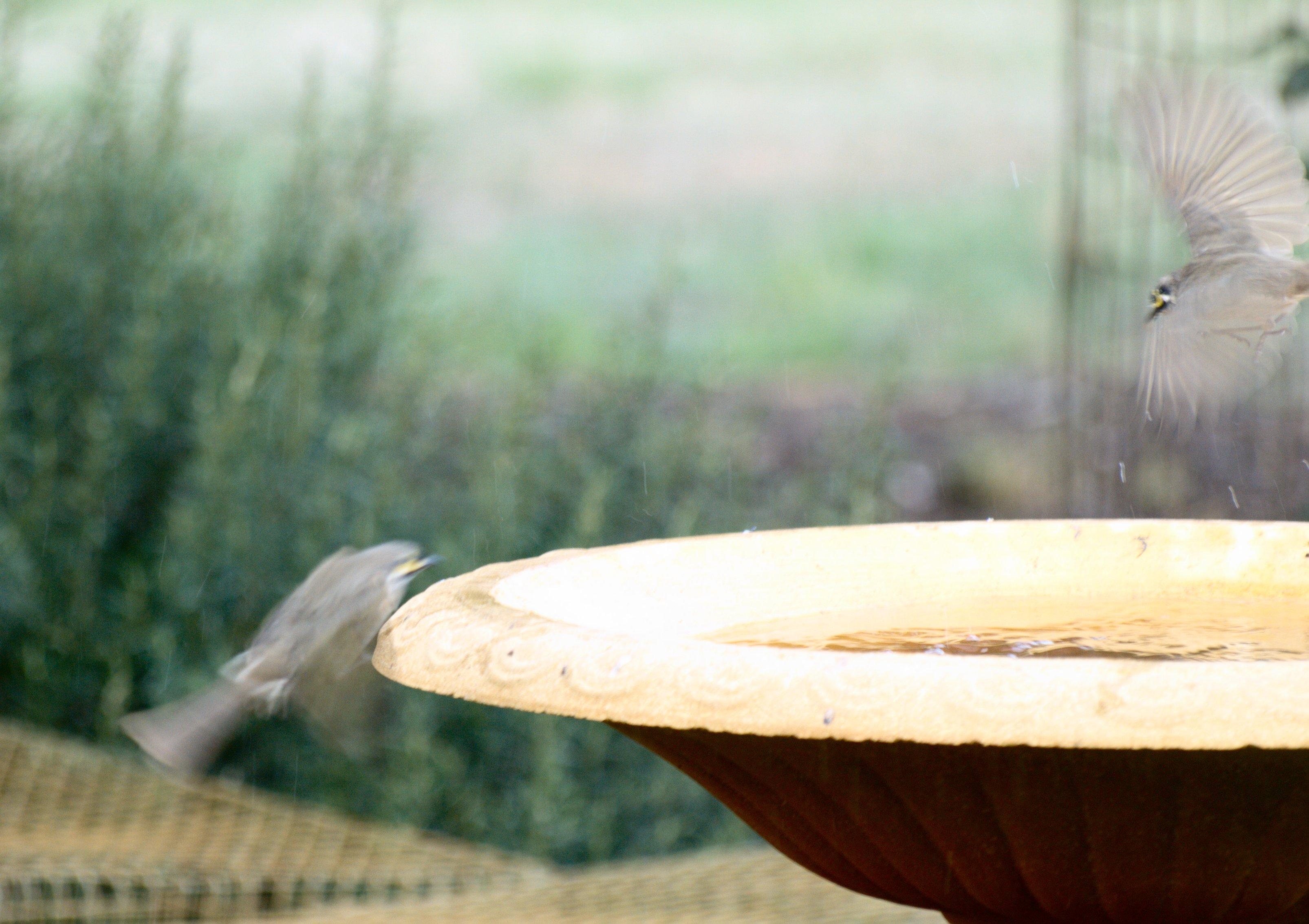 birds-13.jpeg