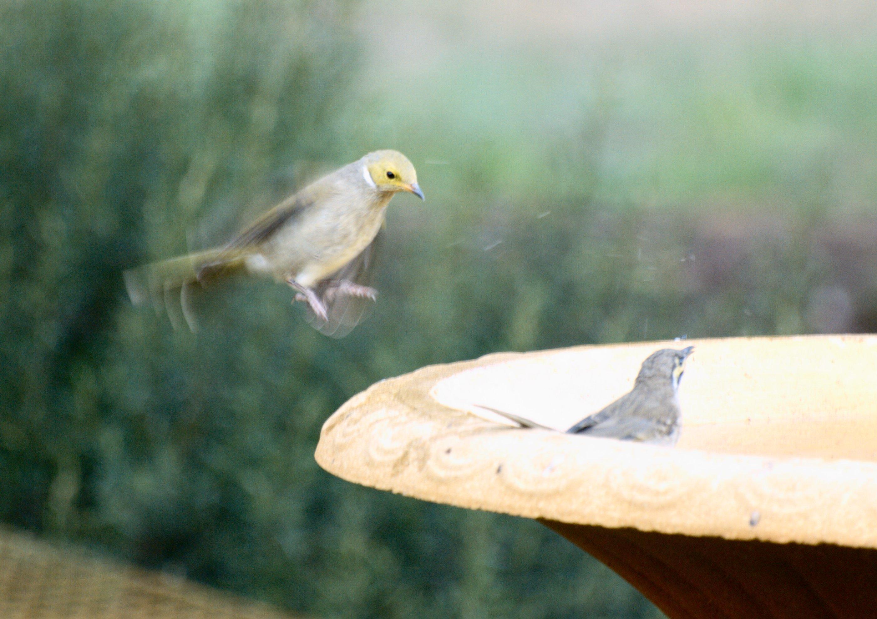 birds-4.jpeg