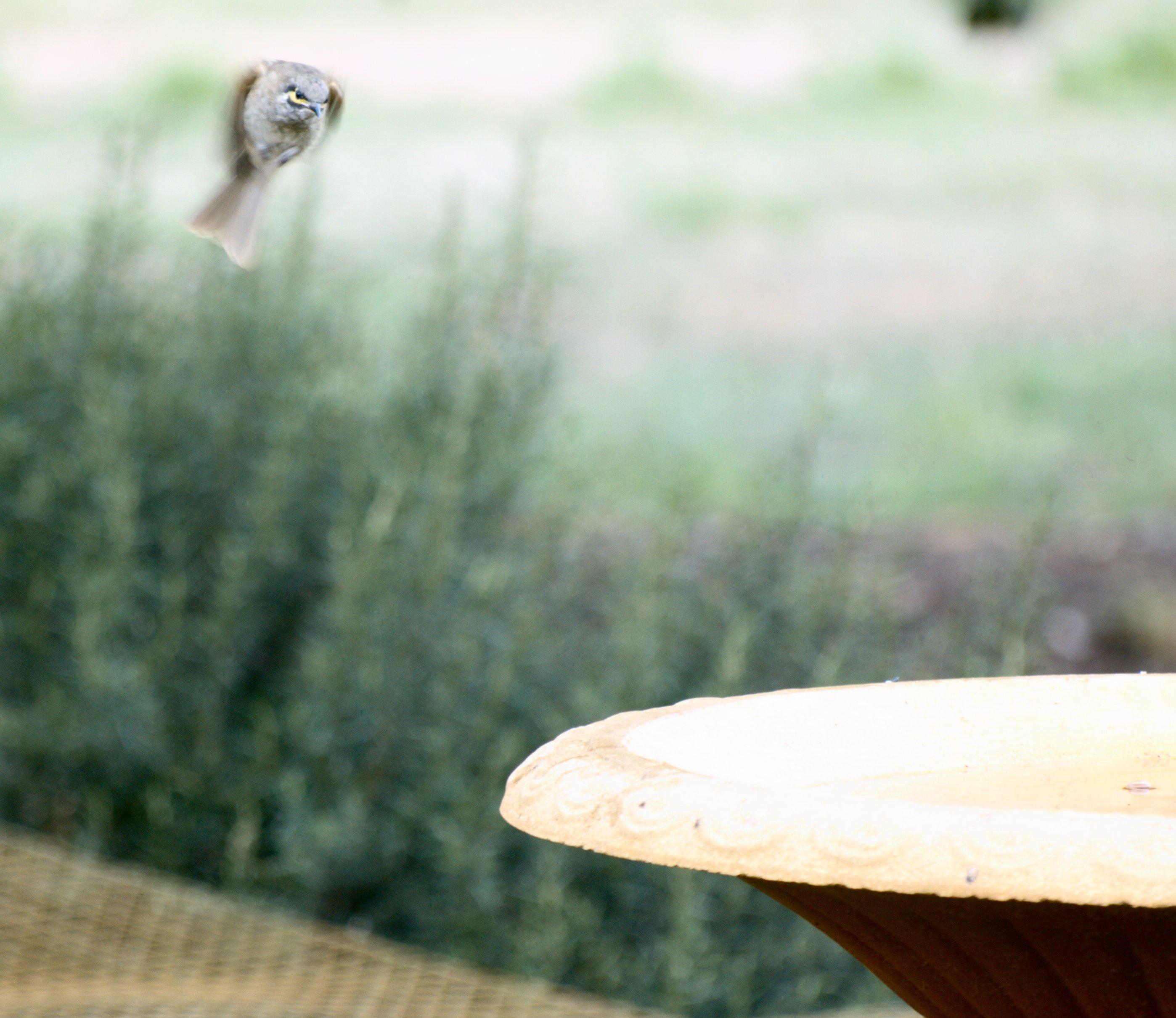 birds-9.jpeg