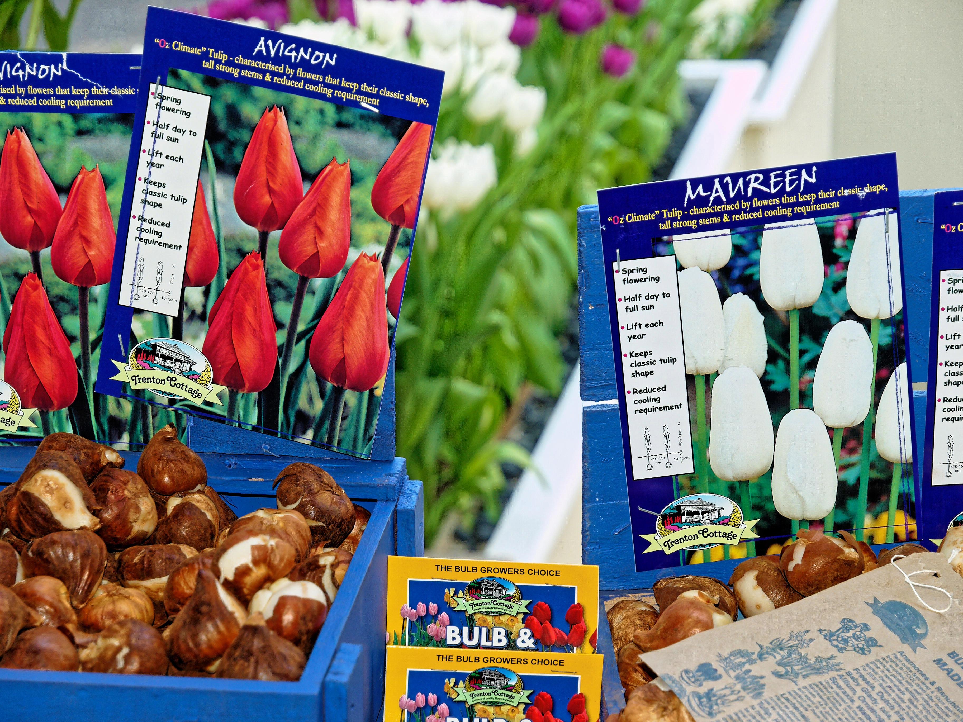 Tulips-2.jpeg