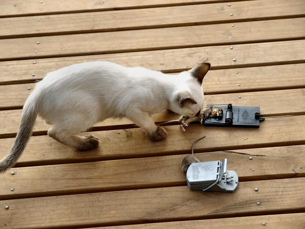 Piccola-mouse-1.jpeg