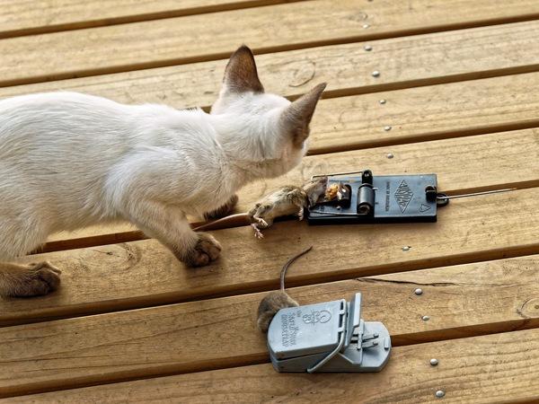 Piccola-mouse-2.jpeg