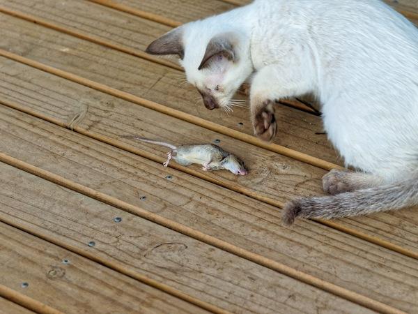 Piccola-mouse-3.jpeg