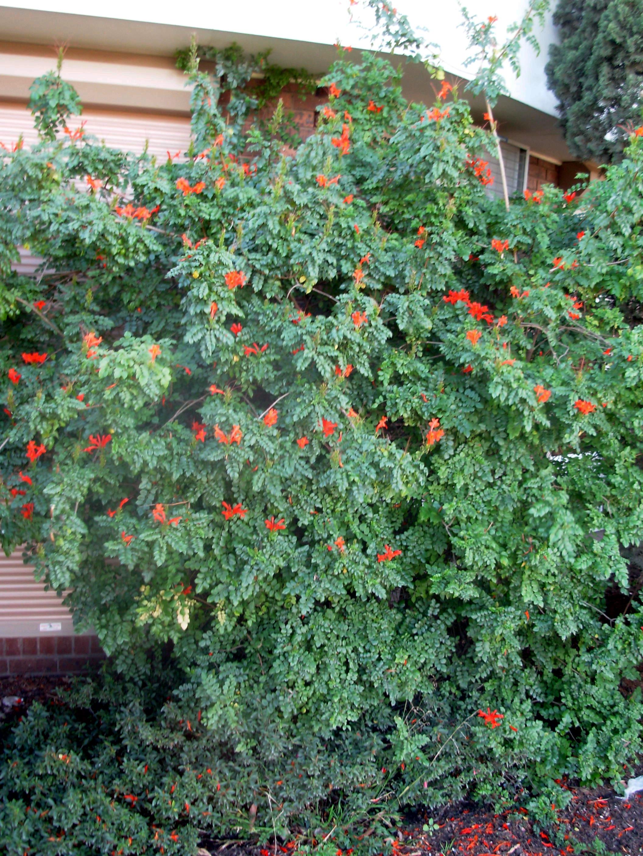 mystery-plant-6.jpeg