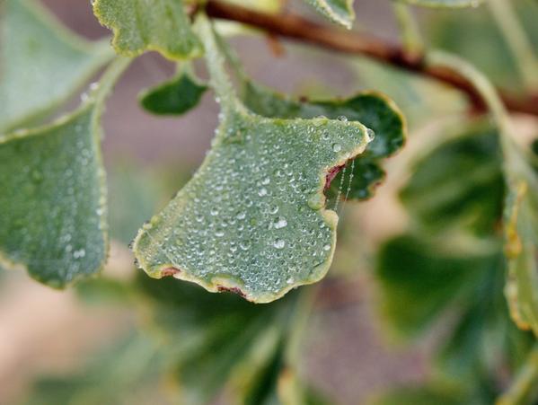 leaf-2.jpeg
