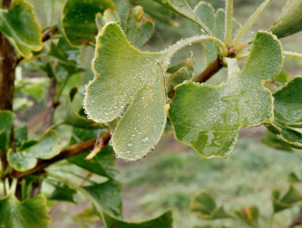 leaf-5.jpeg