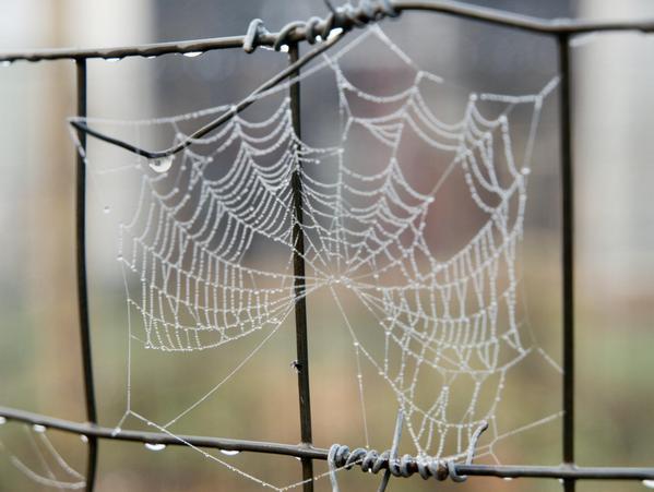 web-1.jpeg