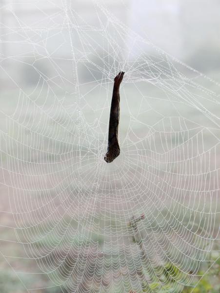 web-5.jpeg