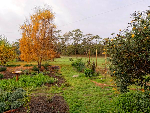 garden-e.jpeg