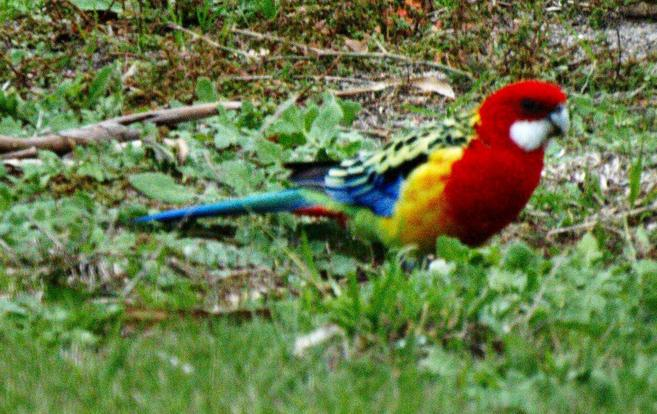 rosellas-9-detail.jpeg