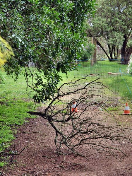 Fallen-branch-2.jpeg