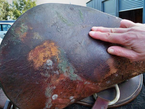 Mouldy-saddle-1.jpeg