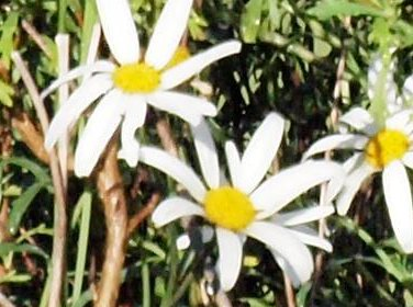 This should be Olympus-daisies-detail-2.jpeg.  Is it missing?