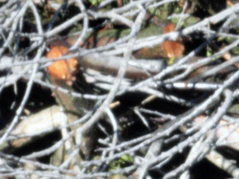 Rokinon-pyre-detail-2.jpeg
