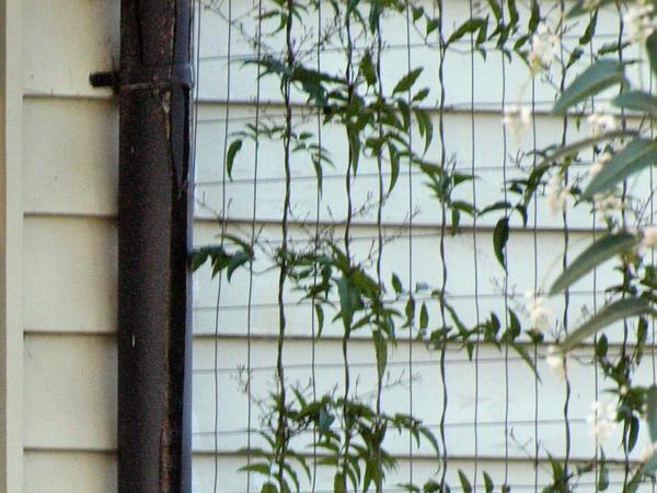 Olympus-verandah-detail.jpeg