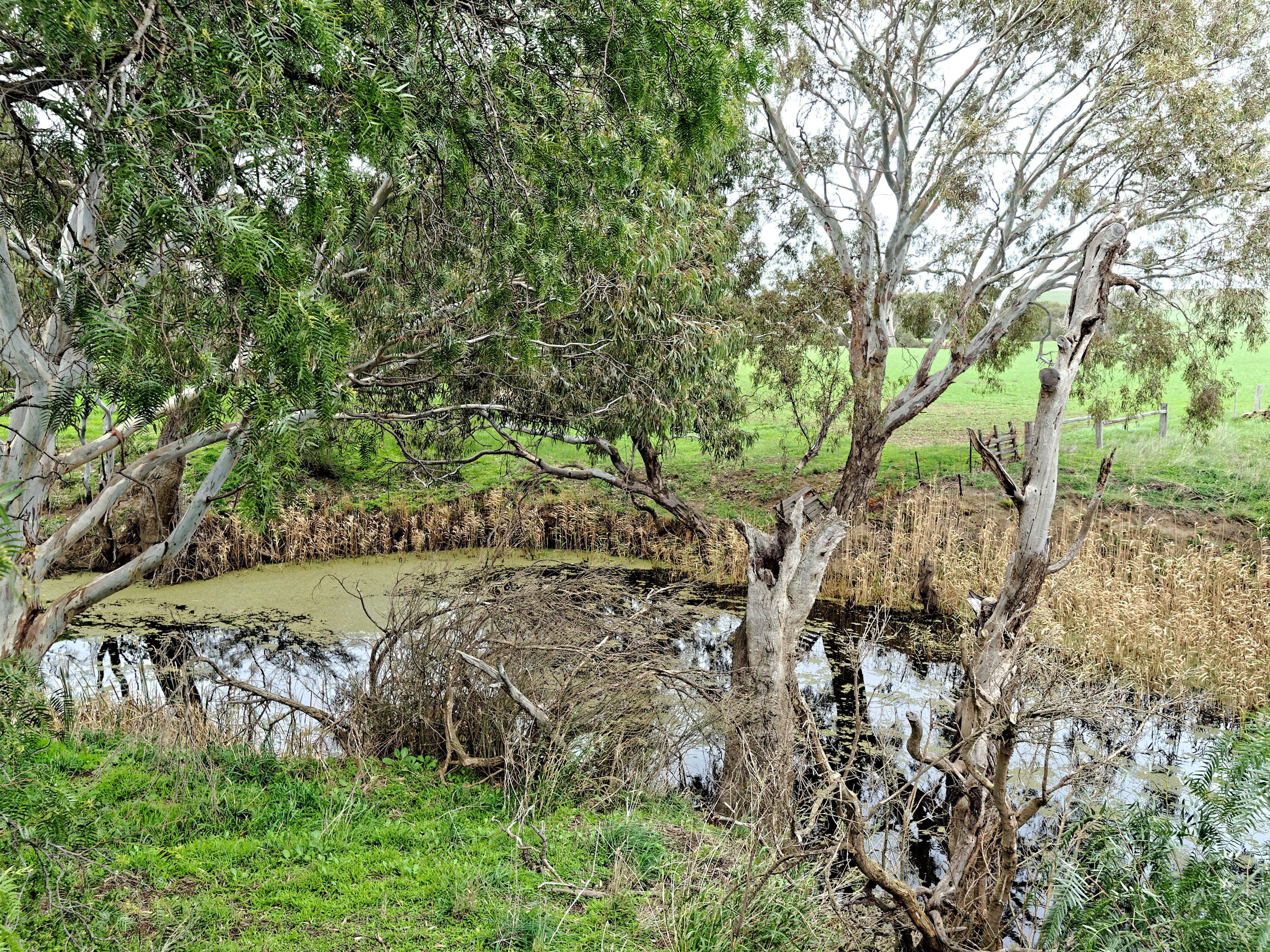 Creek-1.jpeg