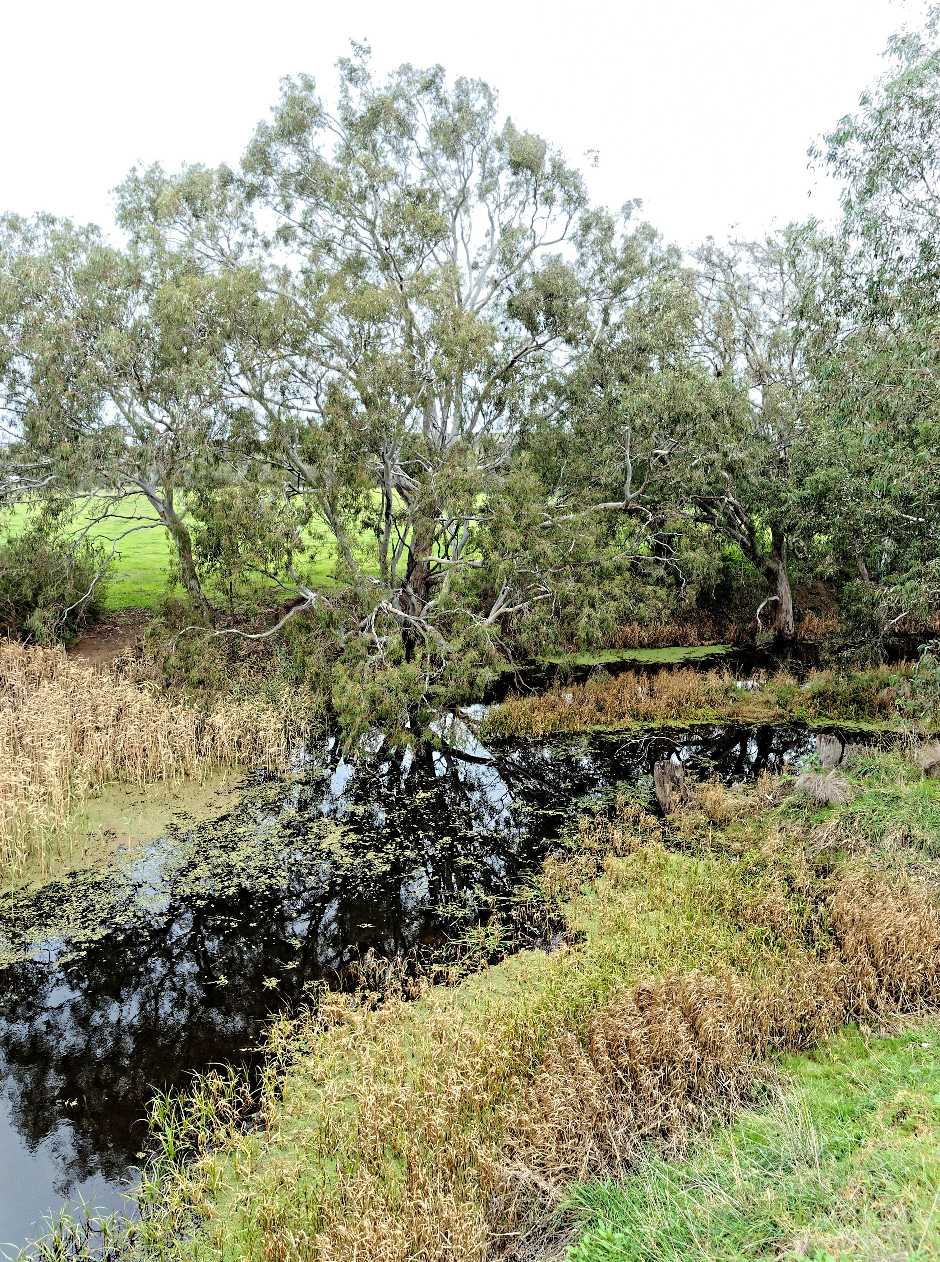 Creek-2.jpeg