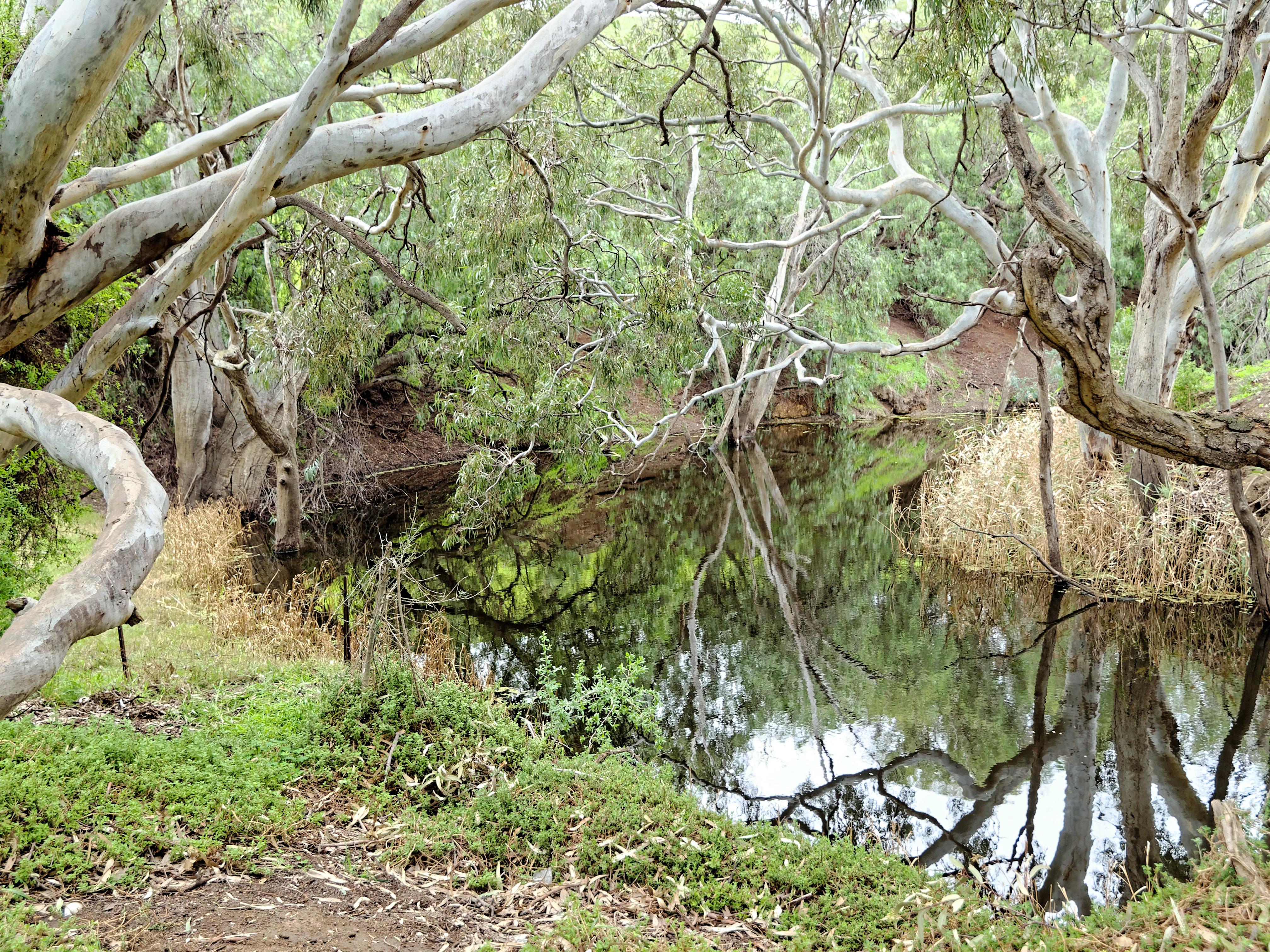 Creek-4.jpeg