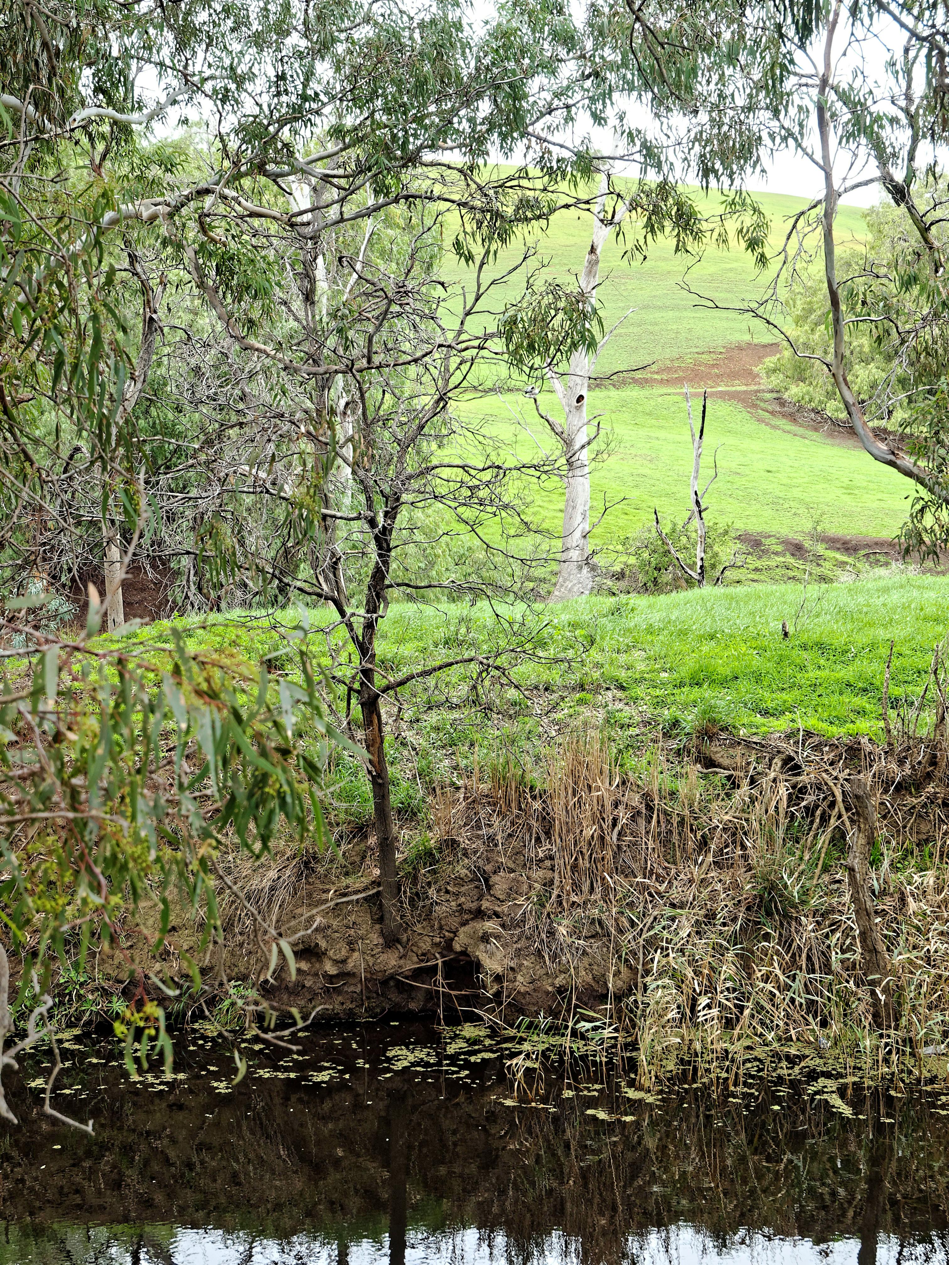 Creek-7.jpeg