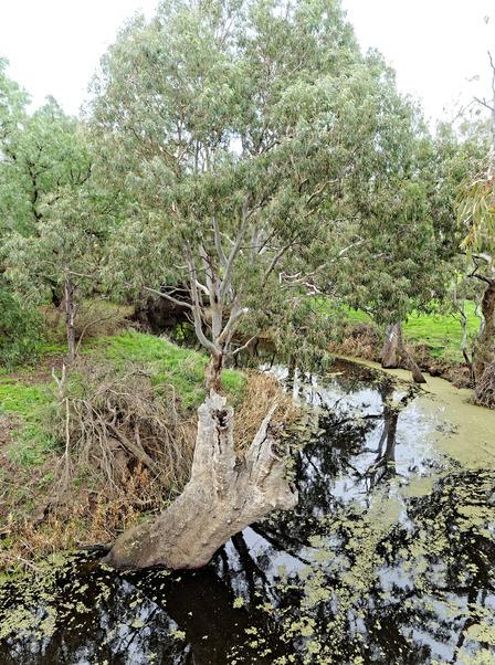 Creek-3.jpeg
