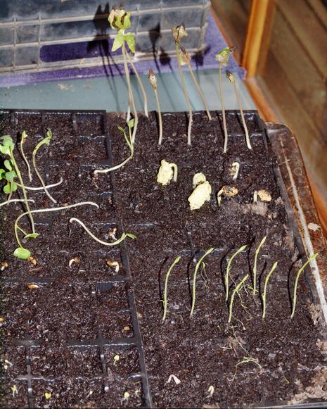 Seedlings.jpeg