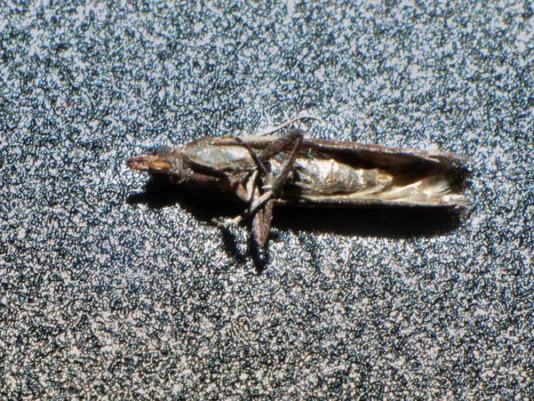 Moth-5.jpeg