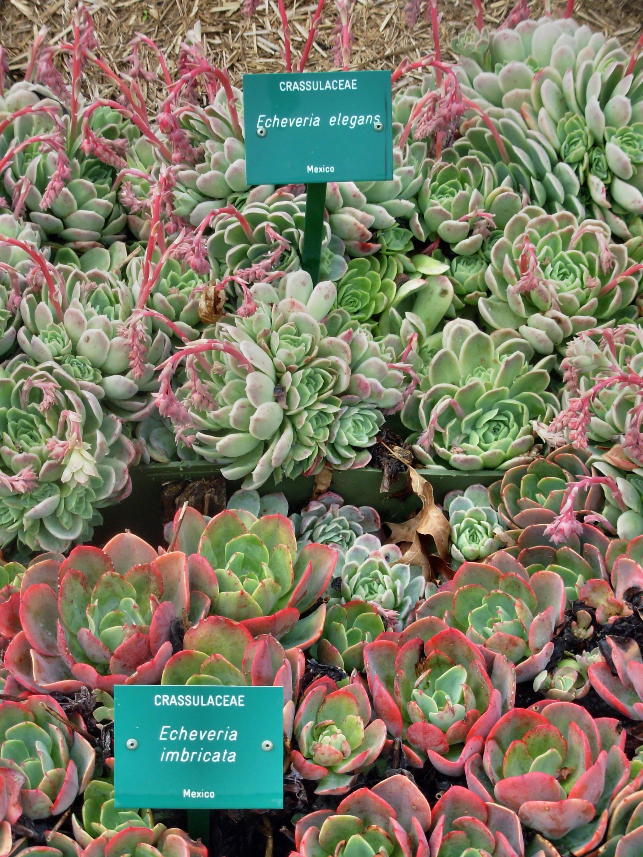 Botanic-Gardens-11.jpeg